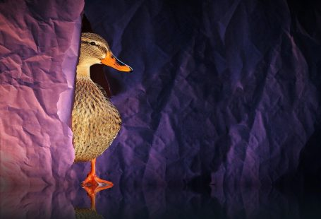 Can ducks eat rice