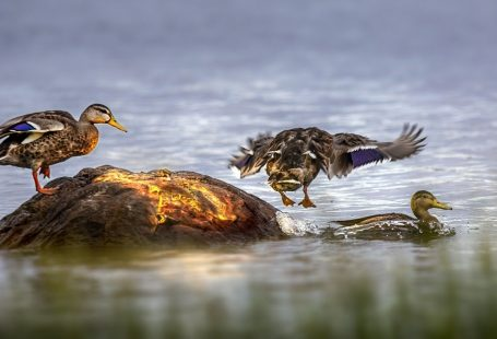 What can ducks eat besides bread