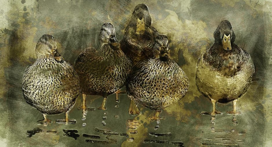 What type of ducks do we eat