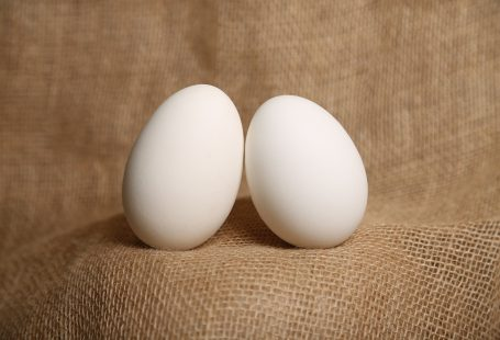 duck egg incubation period